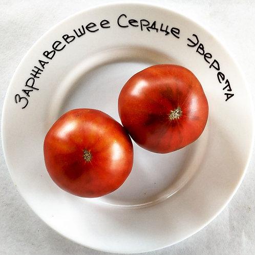 """""""Заржавевшее сердце Эверетта"""" сорт томата 10-15 семян"""