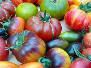 Дневник коллекционера томатов