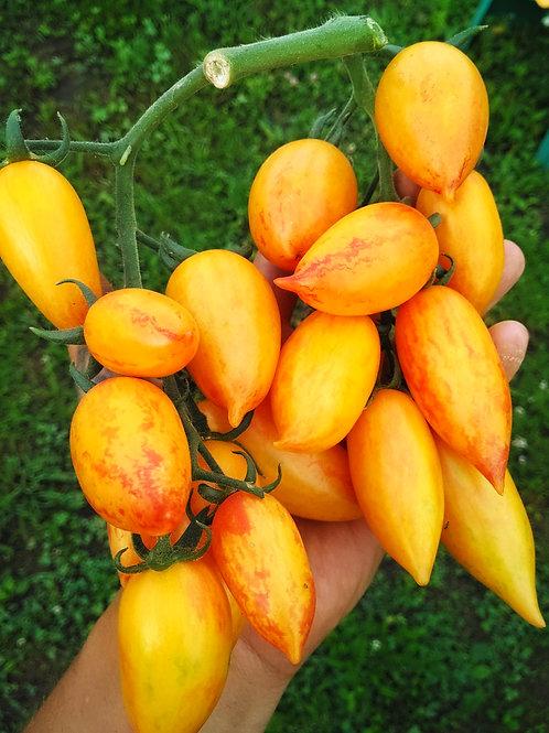 Sweet Cream (Сладкий крем), США сорт томата 10-15 семян