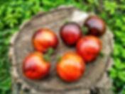 Карликовые сорта томата, низкорослые, штамбовые, помидоры для дома, подоконника, балкона