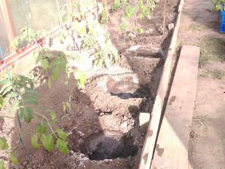 Сажаем томаты, готовим ямы.