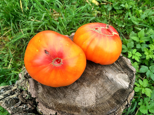 Армянские (Armenian) сорт томата 10-15 семян