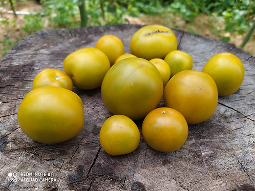 Lime Green Salad (Лайм Грин Салад), США сорт томата 10-15 семян