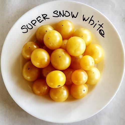 Super Snow White (Супер-белый снег) сорт томата 10-15 семян