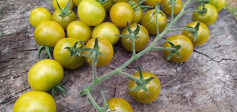 Доктор Грин (Dr. Green) сорт томата 10-15 семян