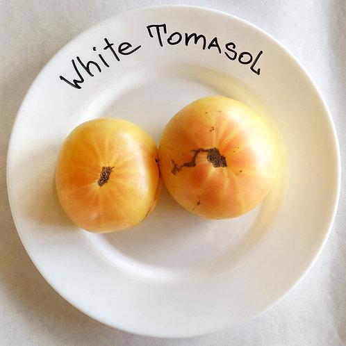 White Tomasol
