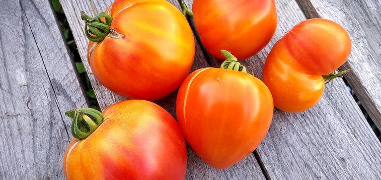 Деревенский (HillBilly) сорт томата 10-15 семян