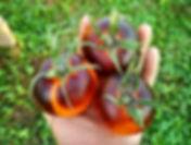Среднеплодные сорта томата, сливки, круглые, для закатки, овальные