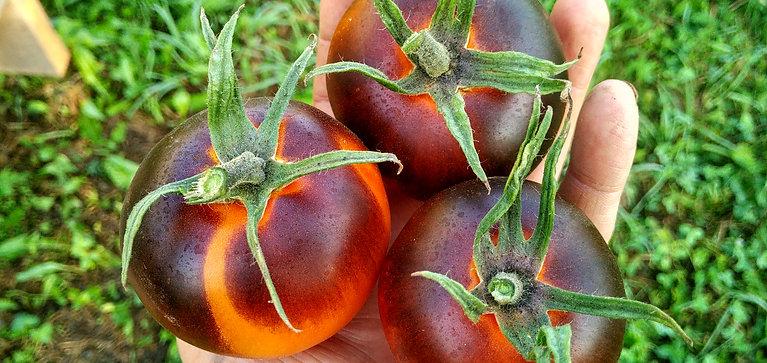 """""""Orange blue"""" сорт томата 10-15 семян"""