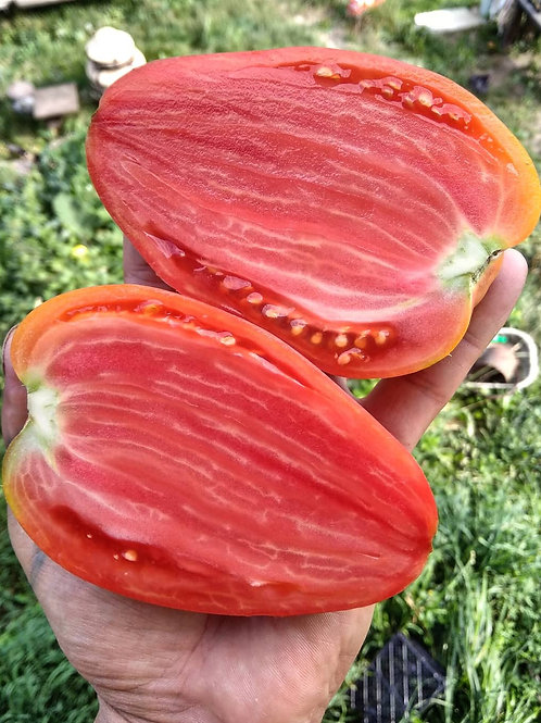 Для пасты (Италия) сорт томата 10-15 семян