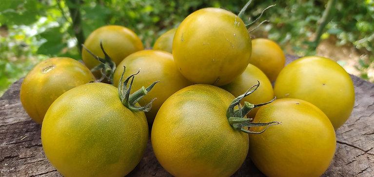Зелёный мёд (Green honey) сорт томата 10-15 семян