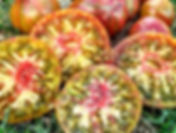 Сорта томата для теплицы, помидоры для защищённого грунта
