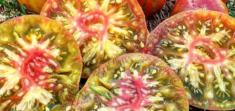 Лимонные полосы Чероки (Lemon Cherokee strips) сорт томата 10-15 семян