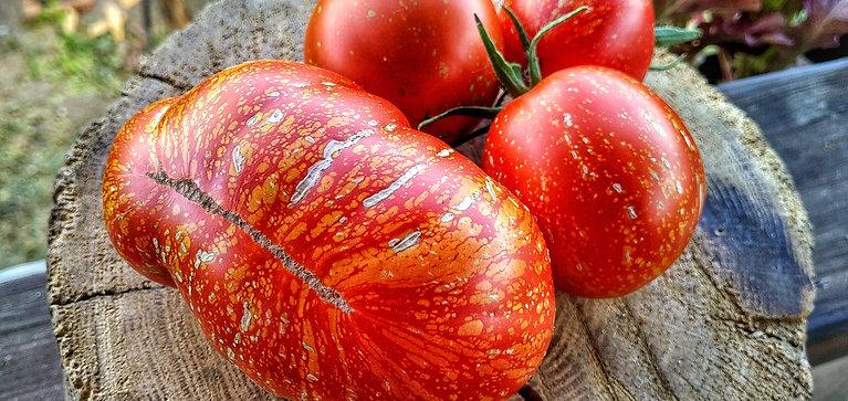 Каскад лава (Cascade lava) сорт томата 10-15 семян