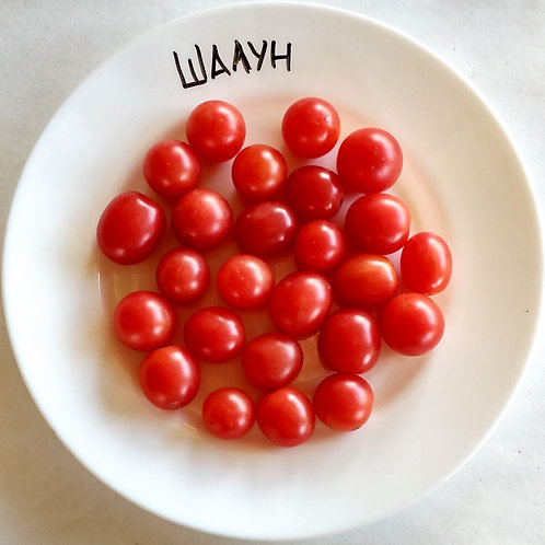 """Шалун"" сорт томата 10-15 семян"