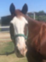 dia horse.jpg