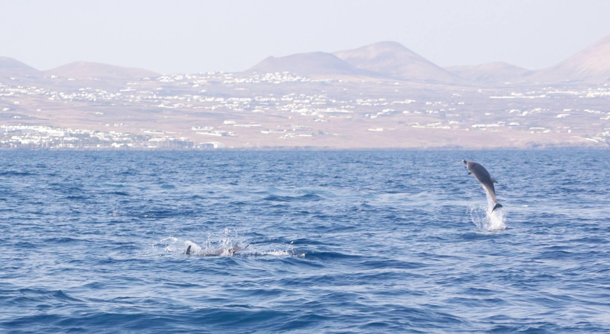 Coastal Sea Safari Boat Tour