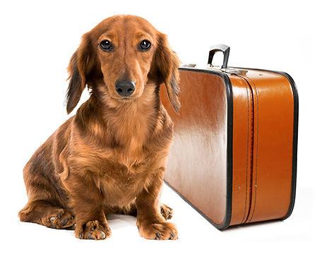 dog-suitcase.jpg