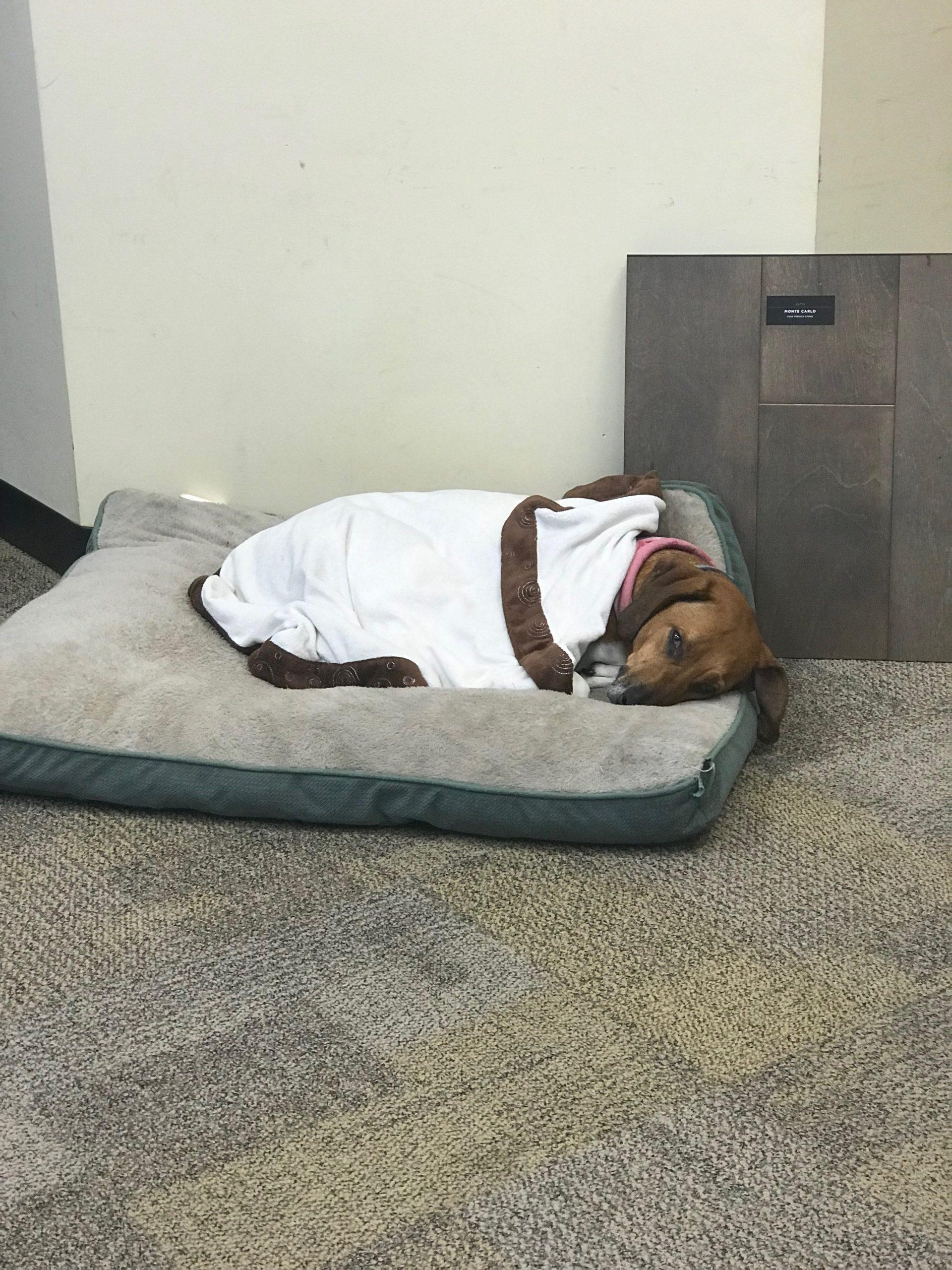 sleepin-pup-scaled