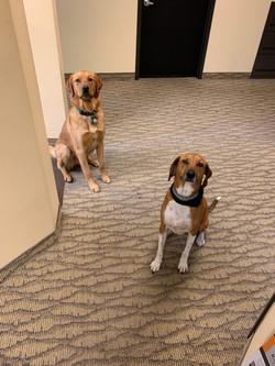 pups-at-work-scaled