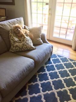 flooring-puppy
