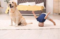 baby-dog-flooring