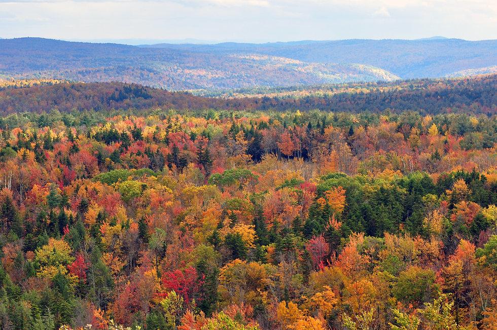 Vermont_fall_foliage_hogback_mountain.JP