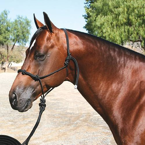 Professional Choice Clinician Halter with 15' lead