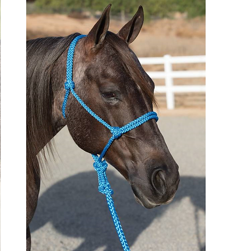 Professional Choice Ranch Hand Halter & Lead - Blue