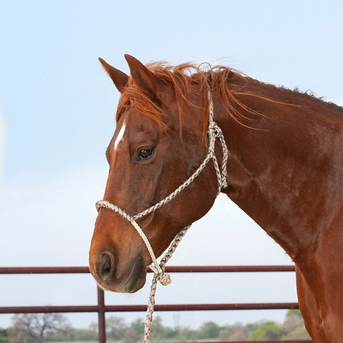 Martin Rope Nose Halter with Lead - Tan