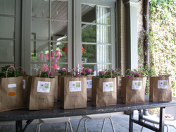 Planter party - ready to go!