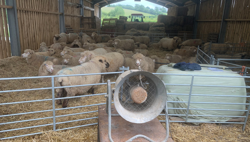 Blow dry before shearing!