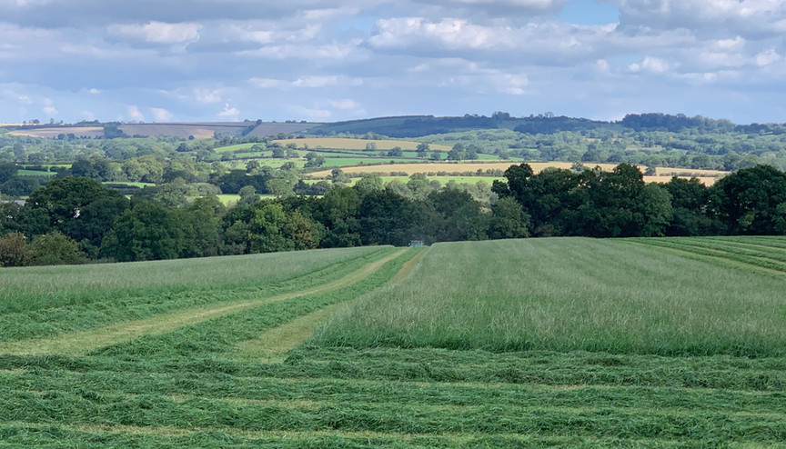 Silage making on the top field