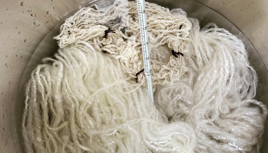 Mordanting wool ready for dyeing