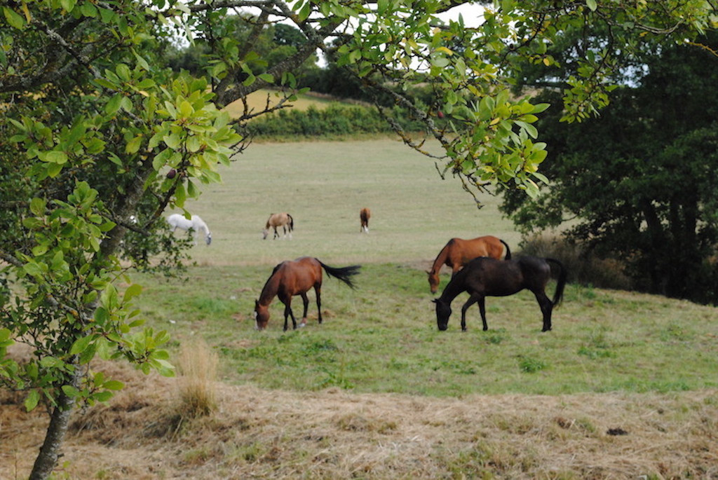 Horses in front of the house