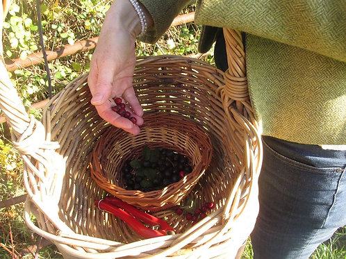 Winter Ills & Hedgerow Berries 1 October 2020