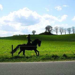 Rider near Nivå in early May.jpg