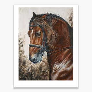 Bay Horse Ltd Ed Print