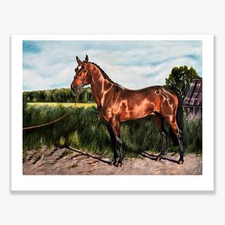 Canadian Stallion Ltd Ed Print
