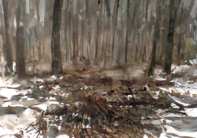 Abcovense Bosjes [01122018]