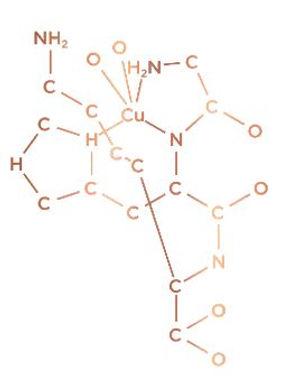 CHK-cu molecule.JPG