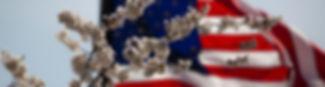 american-flag-flag-flower-1093645.jpg