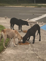 Feeding routes are essential in Puerto R