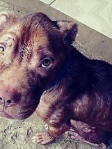 Meet Grady. His owner passed away in Pue