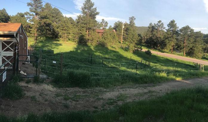 Pasture 2021-06-14 (1)-rotated.jpg