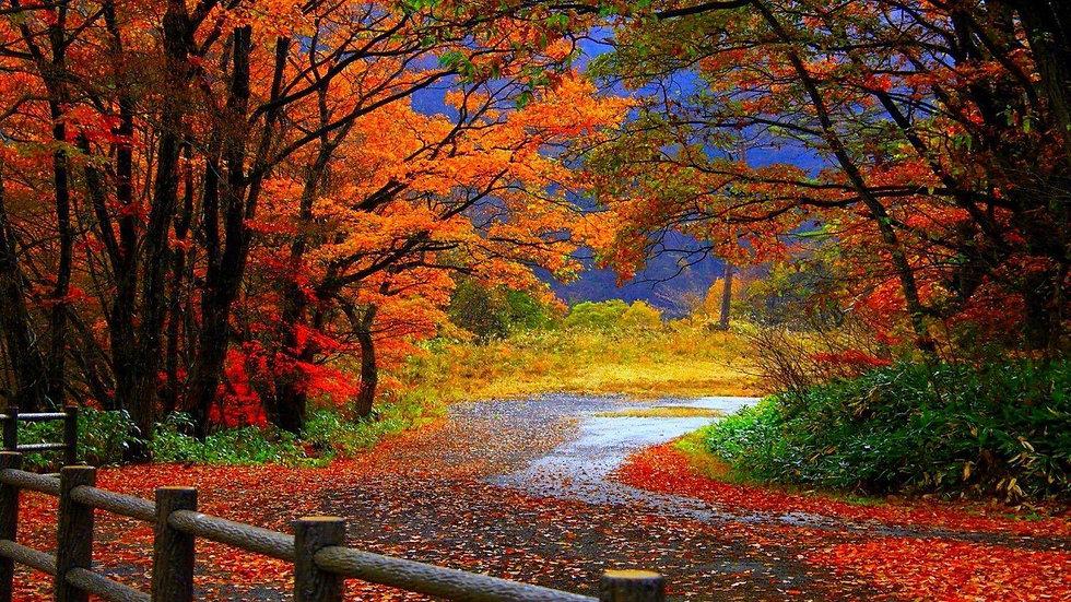 7QpxQm1-fall-background.jpg