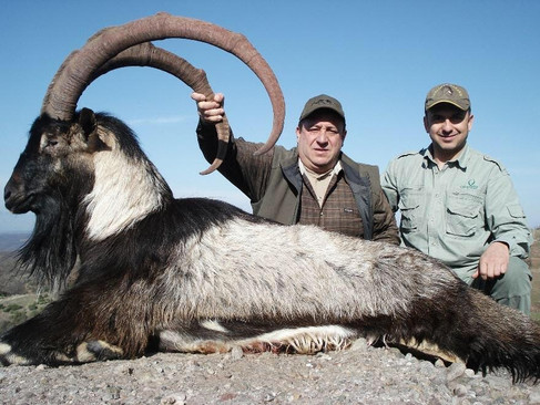 Kri Kri Ibex in Macedonia