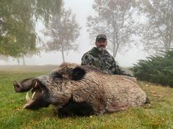 Wild-Boar-2020