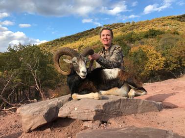 Mouflon Macedonia