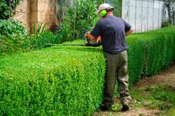 jardinagem 2.jpg